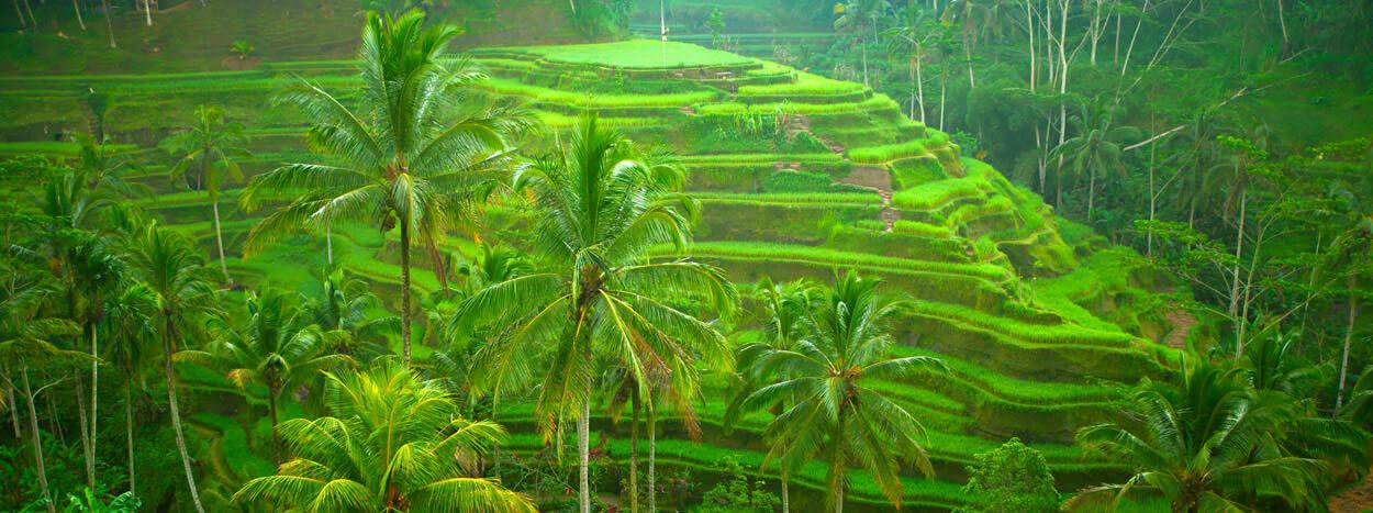 https://www.baliprivatedriver.com/wp-content/uploads/2018/10/Bali-RIce-Filed1-1.jpg